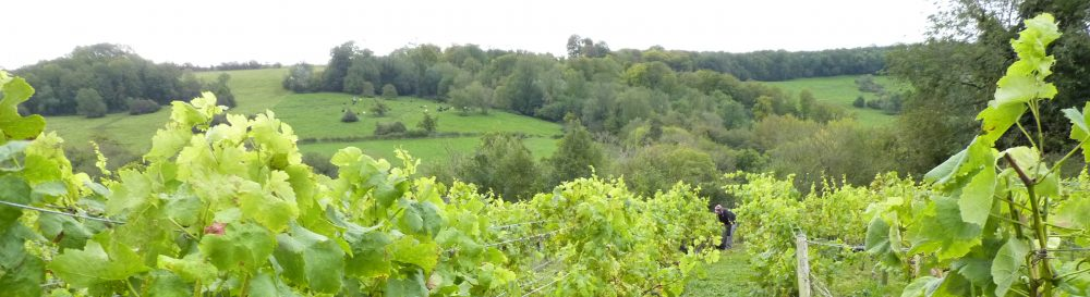 COMBE HAY WINE & VINEYARD